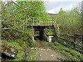 NN3522 : Sheep Creep under the West Highland Railway by Chris Heaton