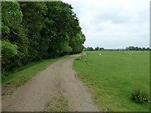 SP7159 : Bridleway by Mr Biz