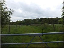 SX6598 : Track leading to North Wyke Wood by David Smith