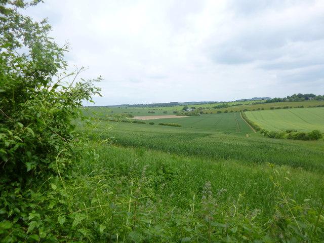 Breamore, cornfield