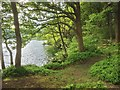 NY3700 : Windermere Shore path through Watbarrow Wood by David Dixon