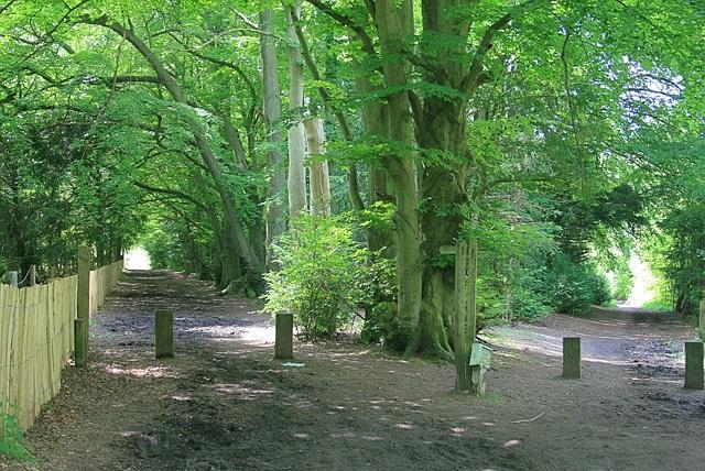 Bridleways off Mill Way car park