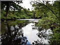 NY3603 : River Brathay near Clappersgate by David Dixon