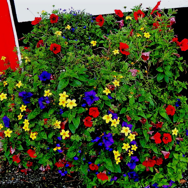 County Clare - Ballyvaghan - Monk's B&B - Flowers at Right Side of Entrance