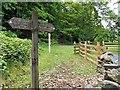 SD3787 : Footpath at Great Knott Wood by David Dixon
