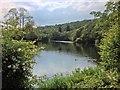 SD3686 : River Leven by David Dixon