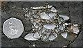 NM4987 : Praemytilus strathairdensis by Anne Burgess
