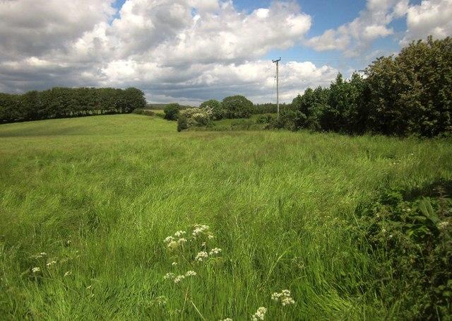 Field near Higher Elsford