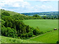 SU6022 : View of the eastern edge of Beacon Hill by Shazz