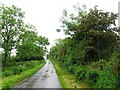 NT9131 : Country lane by Alex McGregor