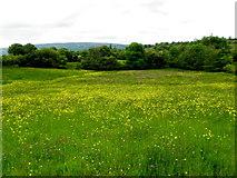 G9424 : Field with buttercups, Cavan by Kenneth  Allen