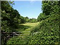 SX9267 : Meadow by the John Musgrave Heritage Trail by Derek Harper