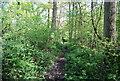 TQ1834 : Footpath, Graylands Plantation by N Chadwick