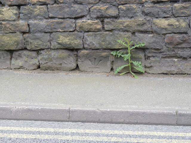 Inverted bench mark, Blidworth churchyard wall
