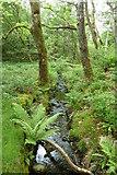 SH6441 : Stream feeding Llyn Mair by Peter Bond