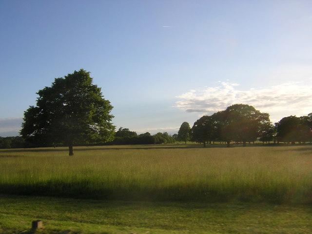 Richmond Park: just inside East Sheen Gate