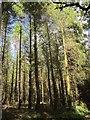 SX7982 : Woodland near Trenchford Reservoir by Derek Harper