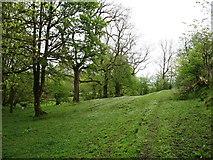 NY0517 : Woodland near Winder by David Purchase