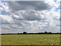TF9116 : Thundery clouds above ripening barley by Evelyn Simak