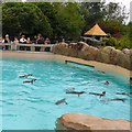 SD3335 : Penguin pool at Blackpool Zoo by Gerald England