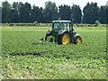 TL4686 : Ridging potatoes on Byall Fen, Welches Dam by Richard Humphrey