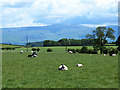 NY5329 : Field with sheep at Carleton by Oliver Dixon