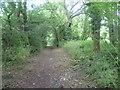 TQ3963 : In Rushfield Shaw by Marathon