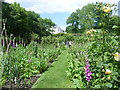 TQ2686 : Foxgloves in the garden at Fenton House by Marathon
