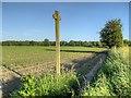 SJ6597 : Footpath Towards Fowley Common by David Dixon