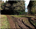ST2789 : Muddy track into Mescoed Mawr by Jaggery