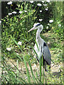 SP9314 : A heron on the Marsh at College Lake, near Tring by Chris Reynolds