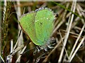 NS3681 : Green Hairstreak by Lairich Rig