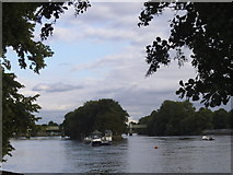 TQ1977 : Oliver's Island, Chiswick by David Howard