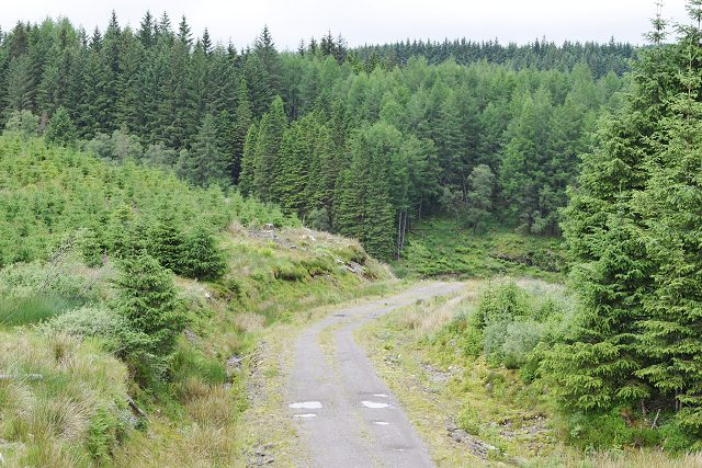 Forestry track in Inverinan Forest