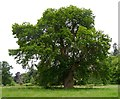 NH4859 : 1550 Sweet Chestnut, by Castle Leod by Craig Wallace