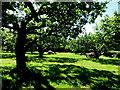 H8960 : Orchard, Peatlands Park by Kenneth  Allen