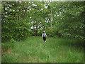 NY6019 : Footpath through Main Ing Plantation by Karl and Ali