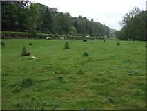 SE7296 : Grazing, Rosedale Abbey by JThomas