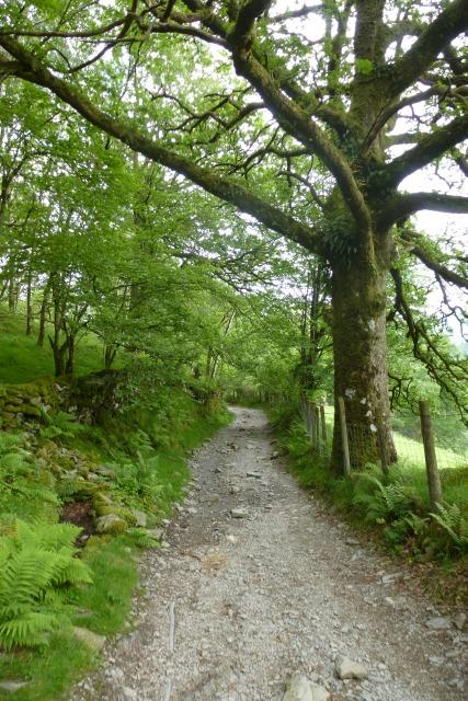 Track through Sawrey's Wood