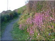 SW3526 : Wild flowers in Stonechair Lane by Rod Allday