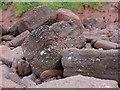 SX9471 : Permian breccia by Alan Hunt