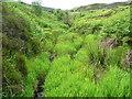 SE0809 : Long grass on valley floor, Swinsey Dike by Humphrey Bolton