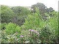 NR6489 : Woodland in Gleann Bhaidseachan by M J Richardson