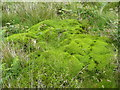 SE0909 : A patch of moss, invaded by a bramble by Humphrey Bolton