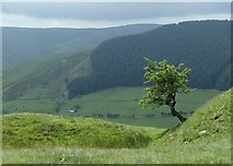 SK1491 : Above Alport Dale by Andrew Hill