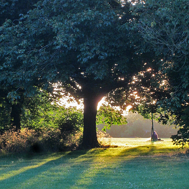 A June evening on Coleridge Rec