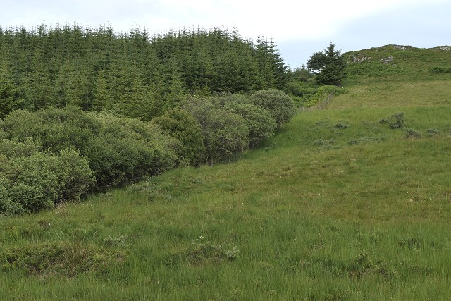 Edge of Nant Forest