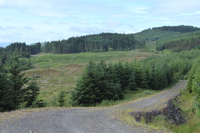 Forest road in Nant Forest