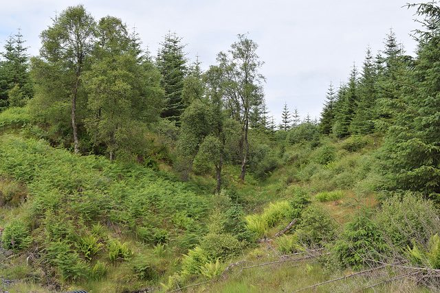 In Nant Forest