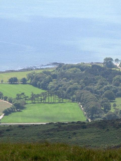 Woodland at Ballyedmond Castle